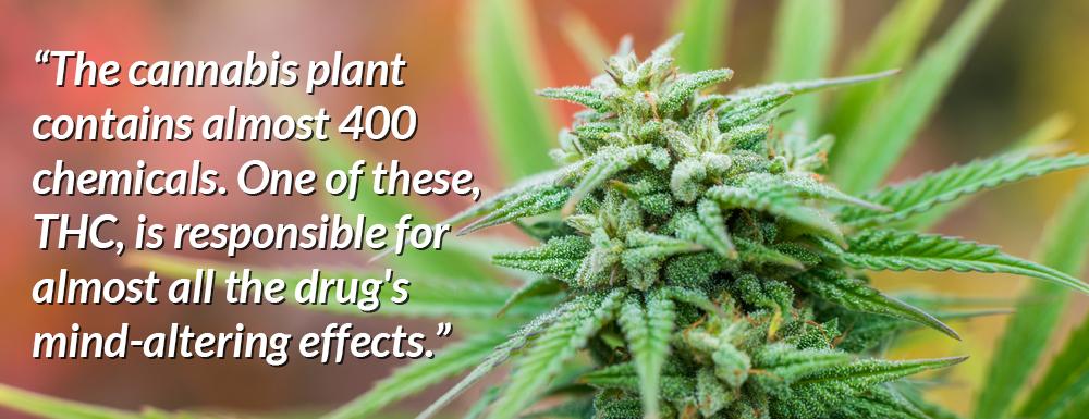 marijuana statistics 400 chemicals