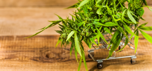 seo for marijuana delivery business