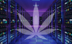 marijuana friendly web hosting
