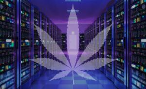 marijuana friendly web hosting